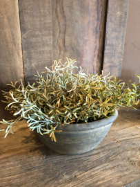 Groen takje olijf herfstkleur van Brynxz