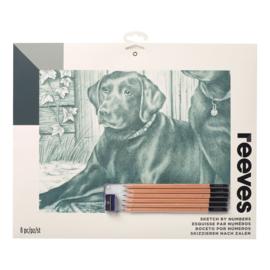 Schets-PPSK10- Labrador