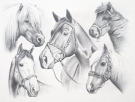 Schets-PPSK2- Horses