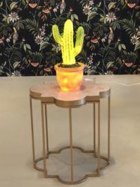 Lamp Cactus in pot