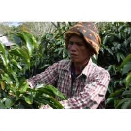 Sumatra Gayo Mountain biologisch