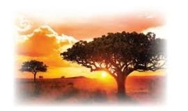 Rooibos African Masala