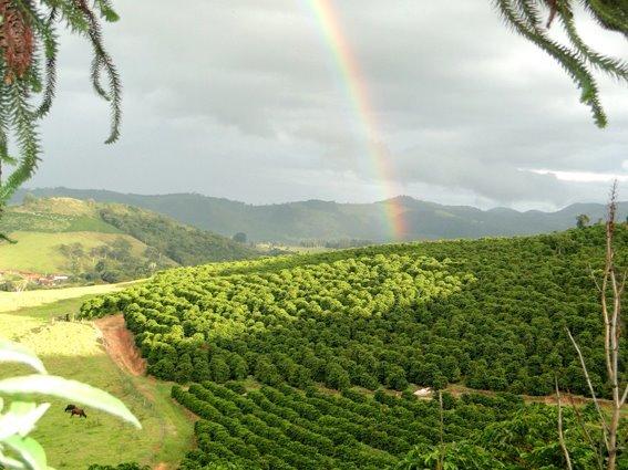 Brasil Goed oogstweer.jpg