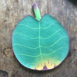 Houten bord tropisch blad