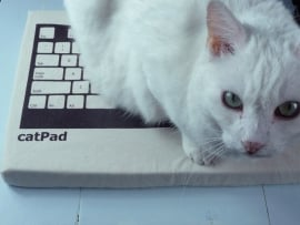 catPad : design kussentje voor de kat.