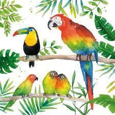 Servet - tropical birds - PPD