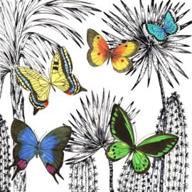 Servet - desert butterflies - PPD