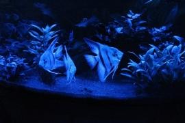 Moonlight LED 45cm – 4 watt