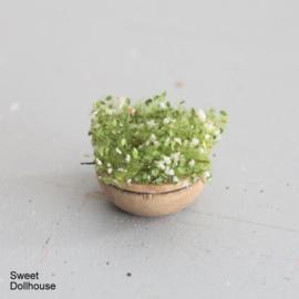 Plant groen-wit in gebeitst houten kommetje