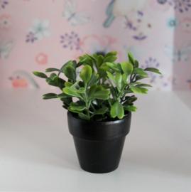 Plant zwart
