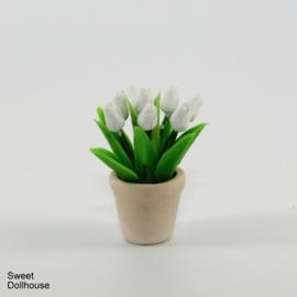 White tulips in pot