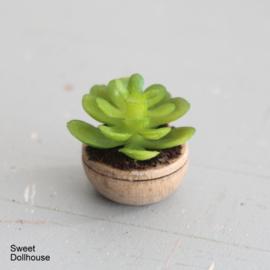Vetplant in gebeitst houten kommetje