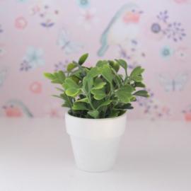 Plant wit
