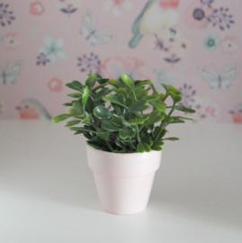 Plant lichtroze
