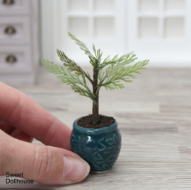 Little tree in pot