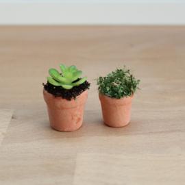 Plantjes in potjes (2 stuks)