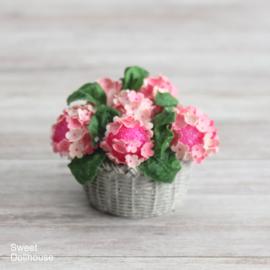 Roze hortensia in mandje