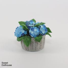 Blauwe hortensia in mandje
