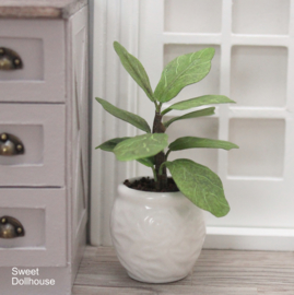 Plant in witte pot