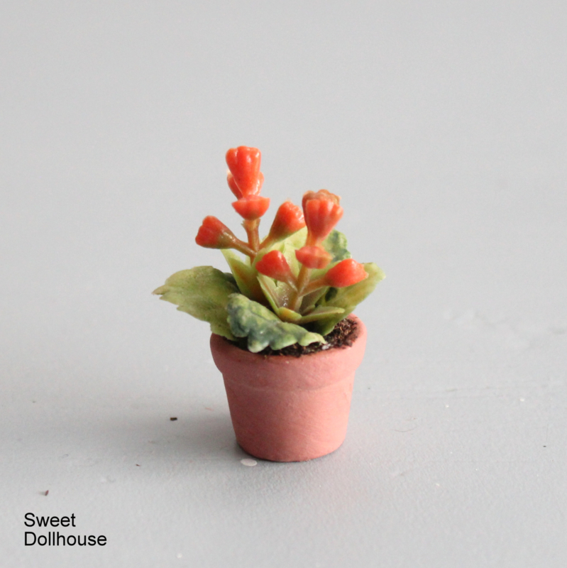 Plantje oranje