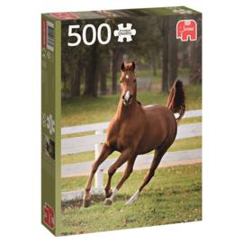 Speels Veulen (500 stukjes)