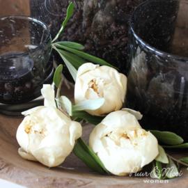 Gevriesdroogde Pioenroos Duchesse Nemours | Roomwit | Small ca. 4 á 5 cm