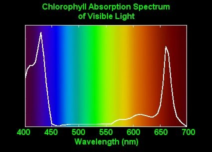 led_kweeklampen_spectrum.jpg