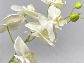 Witte orchidee tak  kunst