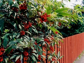 Tuinhek in Zweeds rood