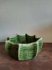 Bloempot cactus van UNC