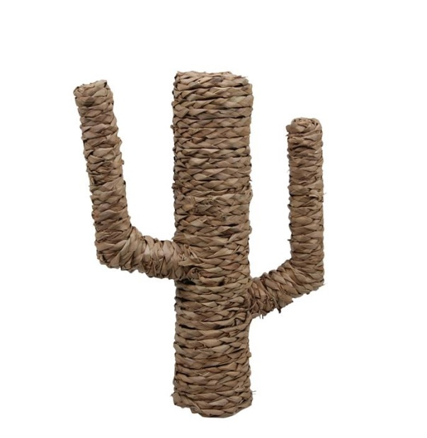 Cactus van zeegras, M