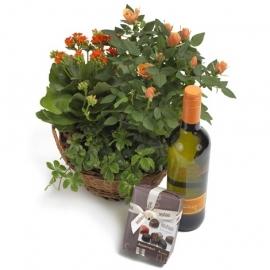 Oranje plantenmix cadeauset