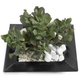 Trendy vetplanten tuinmix