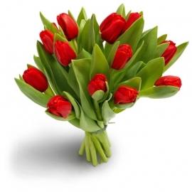 Schitterende rode tulpen