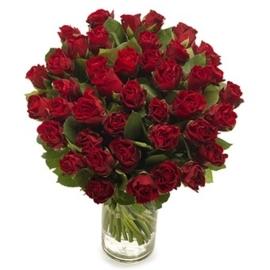 Donker rode rozen