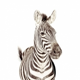 Magneetbehang Zebra 265 x 63,5 cm  incl. set Magneten