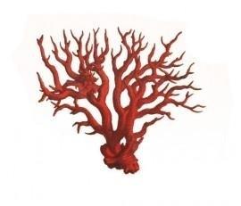 Bloedkoraal