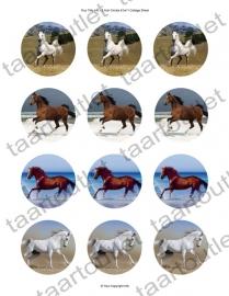 Cupcake Paarden 2