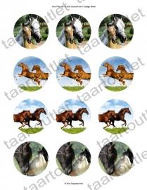 Cupcake Paarden 3