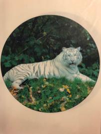 Frosting tijger