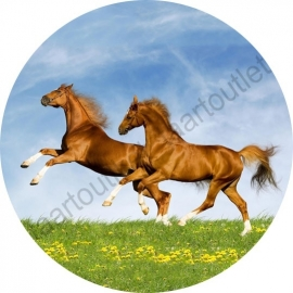 Paarden 2