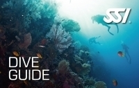 Dive Guide (DG)