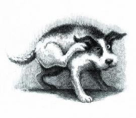 Morandi`s Dog