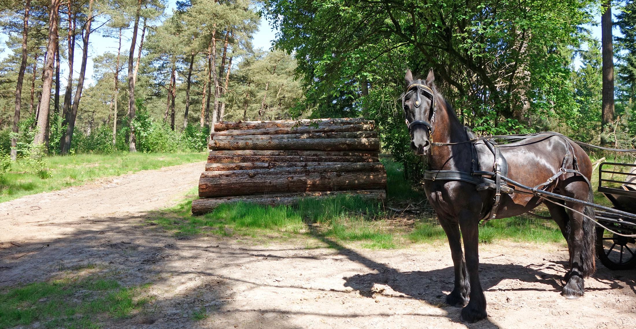 Paardrijden Den Treek Henschoten 1