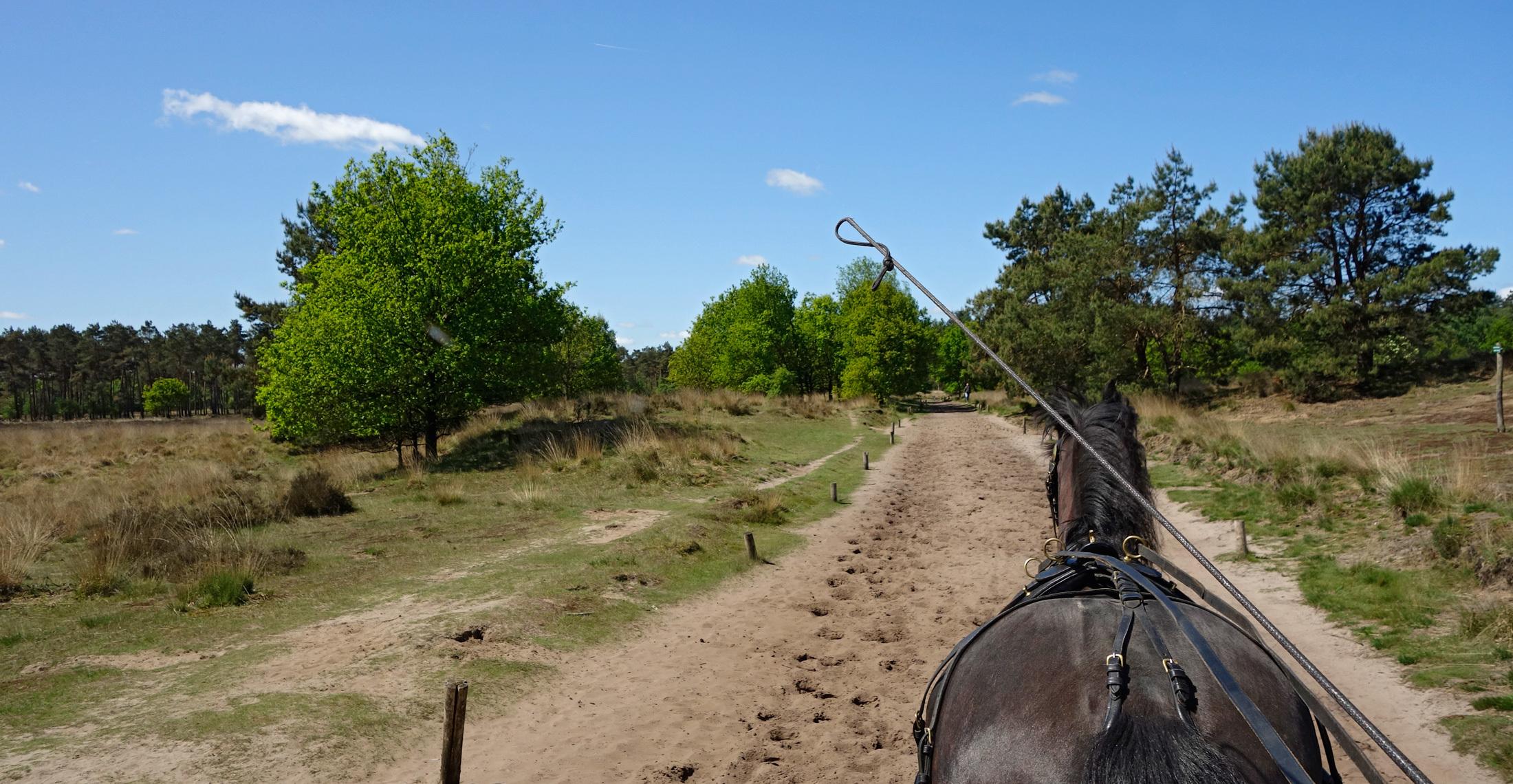 Paardrijden Den Treek Henschoten 4