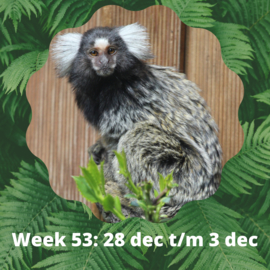 Reserveren week 53 (28 dec t/m 3 jan)