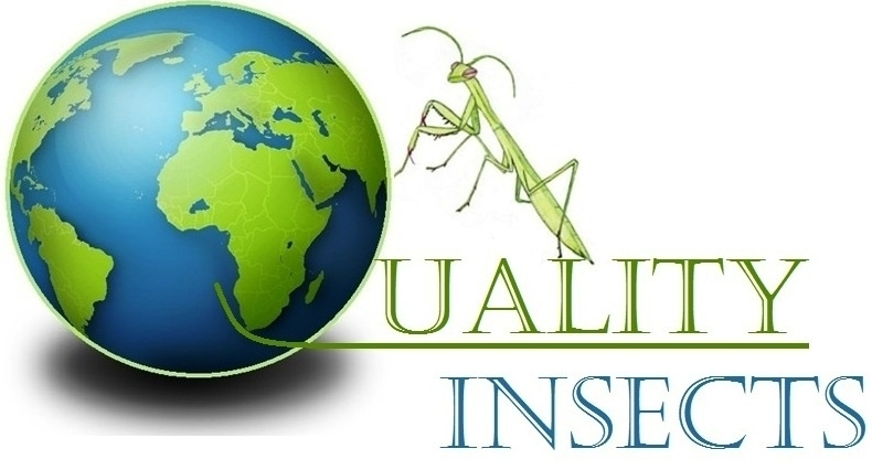 www.qualityinsects.com