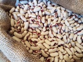 Heilig boontje roodbruin / Adelaarsboontje | Spreadeagle | Soldatenboontje | Saint-Esprit à Oeil rouge / Oogst 2019 kwaliteit extra | teelt: bio | Friesland | 200gr