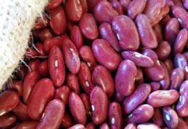 Kidneybeans Red / Noord-Holland / Rode nierbonen / Teelt: regulier / Oogstjaar 2019 / 0,5 kilo