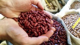 Kidneybeans red / Canada / Rode nierbonen / Teelt: traditioneel /  Oogstjaar 2018 / 0,5 kilo